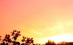 El Sol siempre Gira